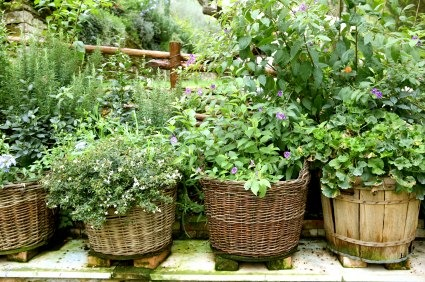Garden Herbs Greg S Kitchen